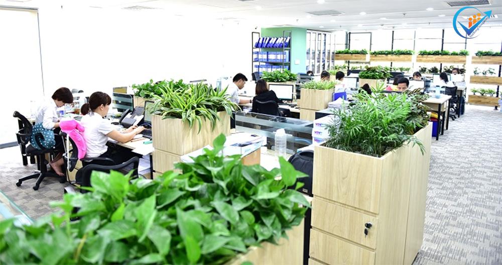 Ý tưởng văn phòng xanh