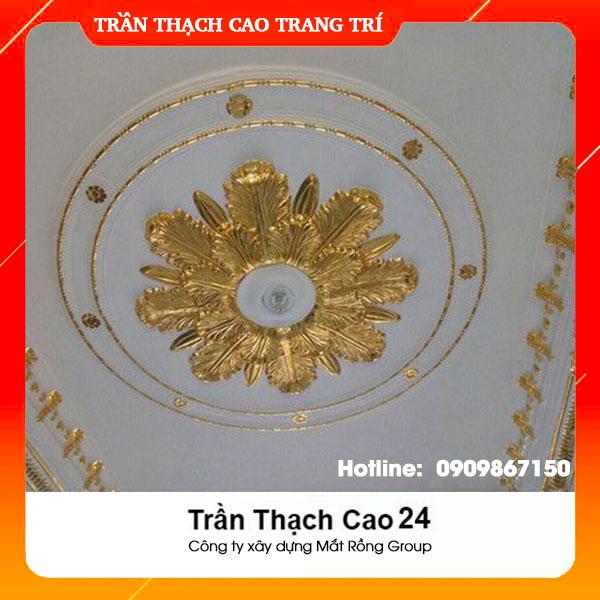 Trần Thạch Cao 24
